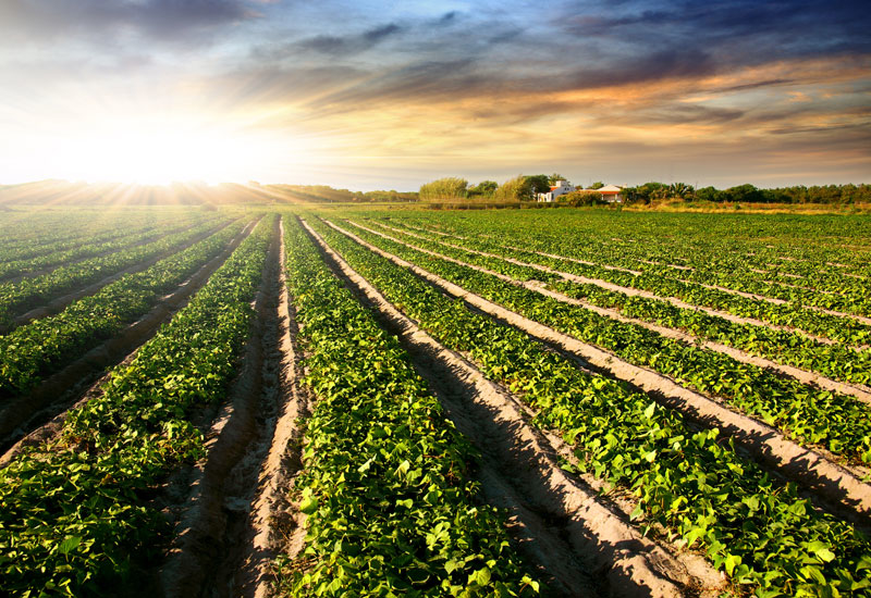 Supply capacity is outstripping demand and crushing profit margins in the Urea market.