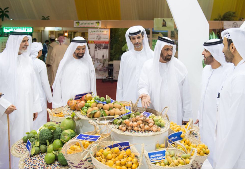 A selection of fresh dates is assessed.